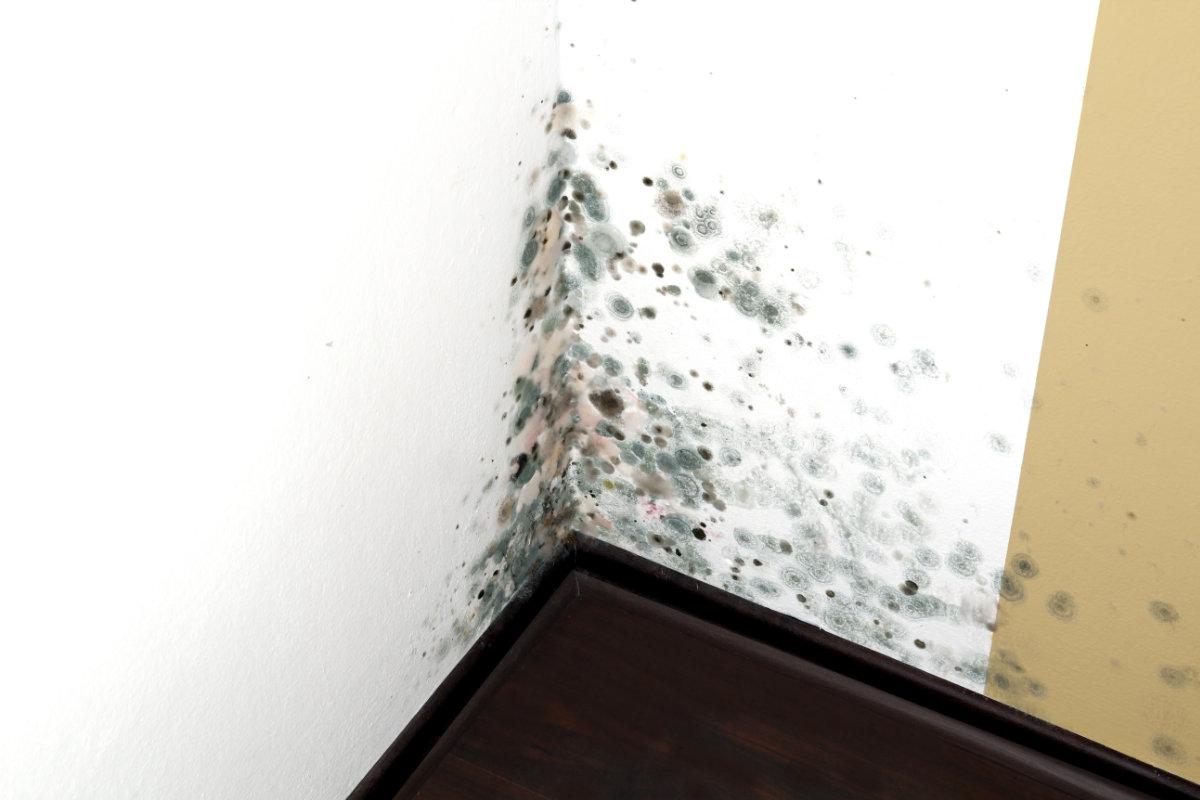 Comment lutter contre l 39 humidit - Lutter contre moisissures humidite ...